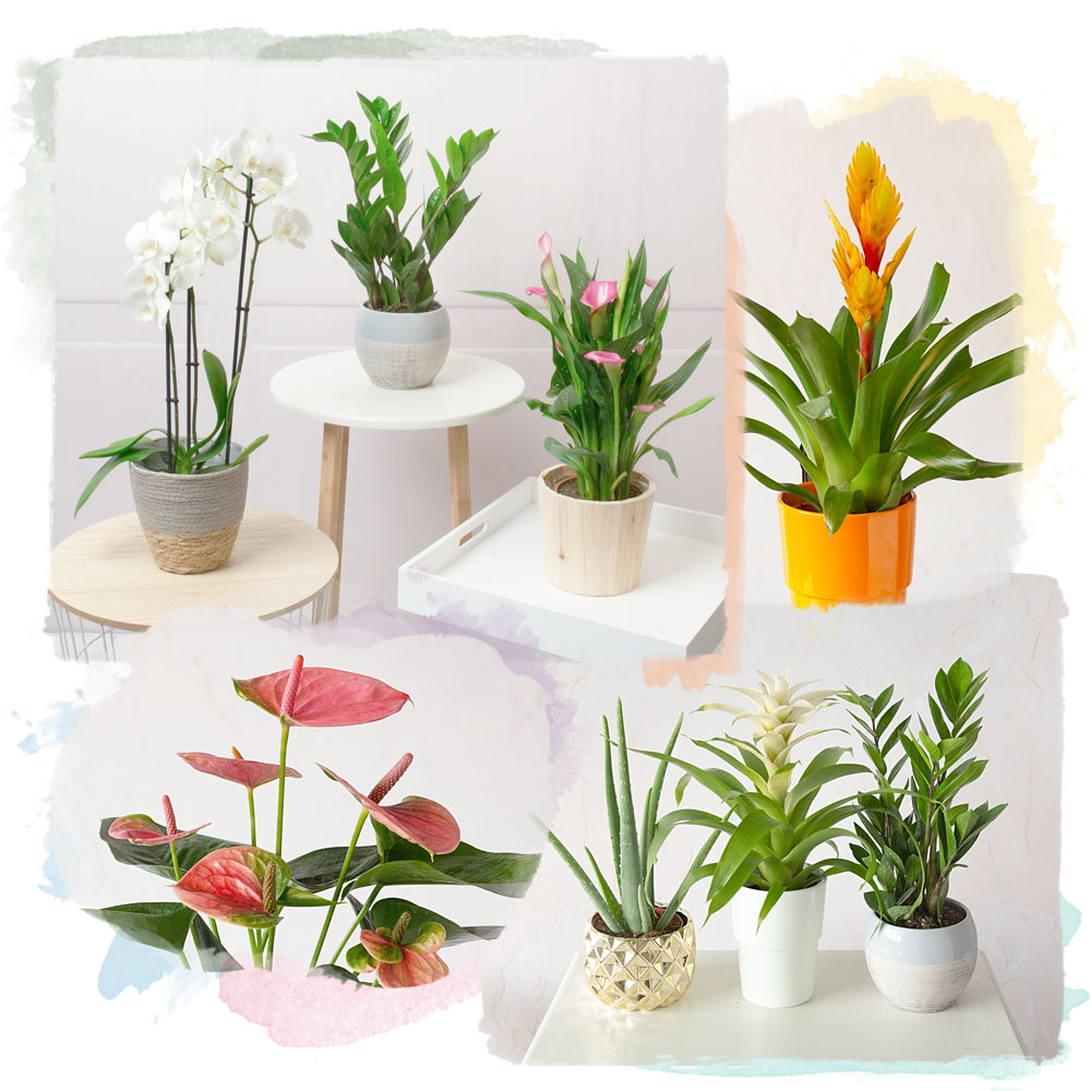 Photograph of previous Plant Lover's Choice plants