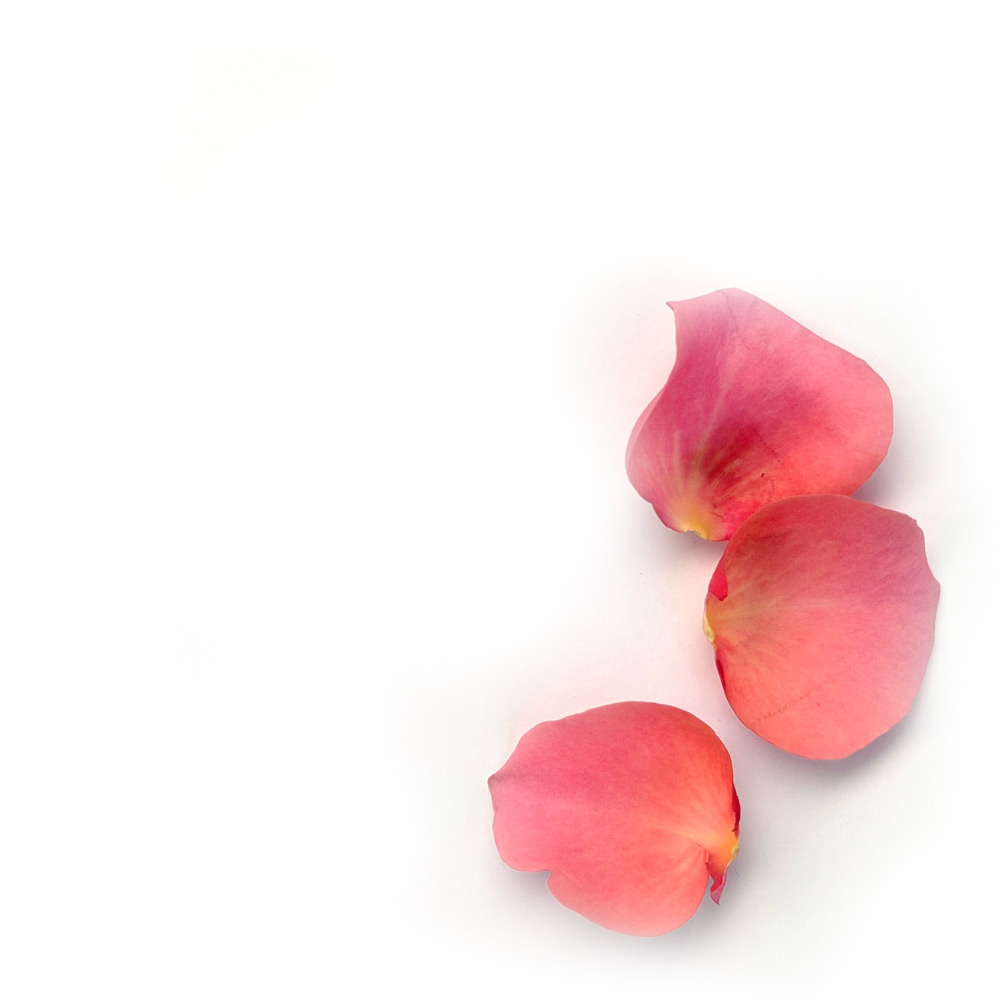 Photograph of some petals
